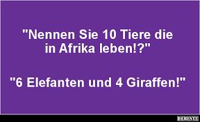 lustige sprüche über das leben nennen sie 10 tiere die in afrika leben lustige bilder