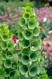 best 25 full sun perennials ideas on pinterest full sun flowers
