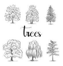 black and white sketch of a tree royalty free vector image