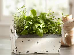13 Easy Herbs To Grow Indoors Hgtv