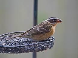 attract birds to your backyard part 3 styles of bird feeders