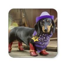 Halloween Costumes Miniature Dachshunds 159 Doxie Dress Images Animals Weenie Dogs