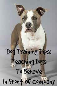 184 best for my dog images on pinterest dog stuff your dog and dog