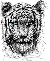 sketch of white tiger royalty free cliparts vectors and stock