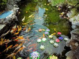 miniteich anlegen pflanzen fische und überwintern