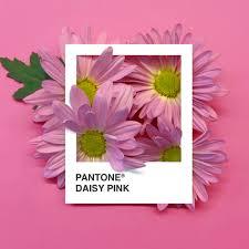 pink pantone insta series pantone flowers u2014 adé hogue