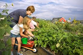 Family Gardens Community Gardens More Beneficial Than Many Think Highland
