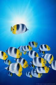 3002 best peces de colores images on pinterest beautiful