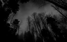 wallpaper tumblr forest black and white forest wallpaper photo wallpapers