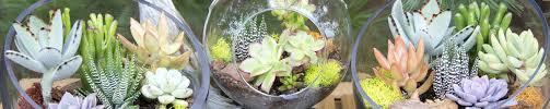 succulent terrariums succulent terrarium centerpieces glass bowls