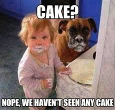 Funny Boxer Dog Memes - 50 funniest dog memes of all time