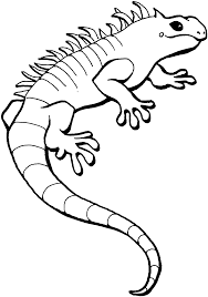 lizard coloring pages coloringsuite com