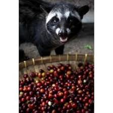 Luwak Coffee 28 best coffee for connoisseurs images on kopi luwak
