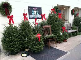 amazing tree sales artificial trees the home