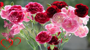 flowers for him s day flowers for him s day flowers for him