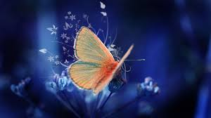 charming butterfly wallpaper images pc download page 12