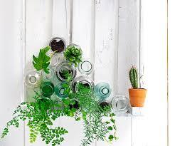 indoor plants images fun with indoor plants