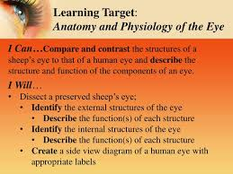 Anatomy Of Human Eye Ppt Ppt Sheep U0027s Eye Dissection Inside U0026 Out Powerpoint Presentation