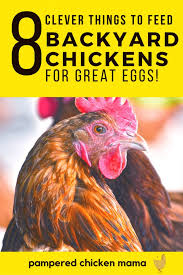 Chickens For Eggs In Backyard What To Feed Your Chickens For Better Tasting Eggs Frugal Chicken
