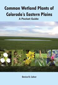 native colorado plants cwic eastern plains field guide