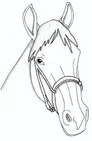 horse face drawing color
