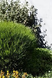 2204 best australian native plants images on pinterest native