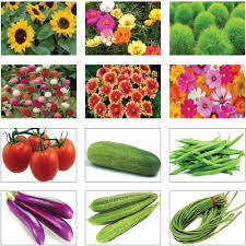 flower food packets summer vegetable and flower seeds kit set of 12 packets