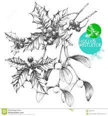 holly and mistletoe royalty free stock photos image 33609728