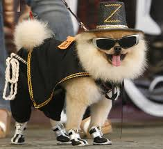 funny dog costumes halloween dog fashion is coming who is the next stylish icon dog apparel