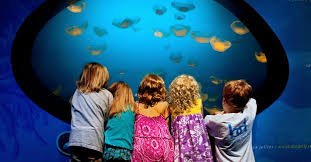 Things To Do In Charlotte Nc Charlotte Nc Family Friendly Attractions Children U0027s Activities