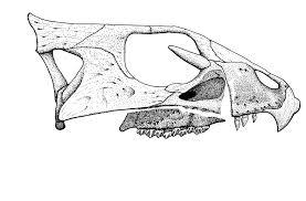 reconstructing the skull of aquilops sauropod vertebra picture of