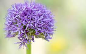 top 20 online plant nurseries the telegraph