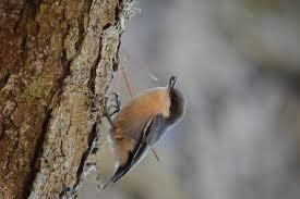 listbirds i used to birds pescadero u0026 pacifica