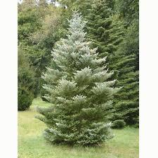 evergreen ornamental trees for small gardens cori u0026matt garden