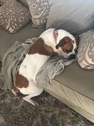 comment empecher mon chien de monter sur le canapé empecher un chien de monter sur le canapé 100 images ce chiot n