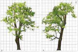 3d tree models