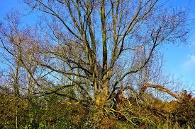 deciduous tree images pixabay free pictures