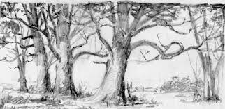 White Oak Tree Drawing A Handful Of Tree Pencils The Art Of Monte Ellis