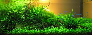 Plants For Aquascaping Aquascaping Aqua Rebell
