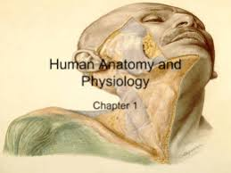Human Anatomy And Physiology Chapter 1 Chapter 1 Study Guide