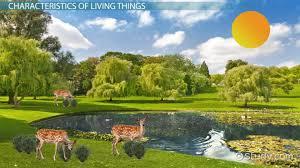 characteristics of living things video u0026 lesson transcript