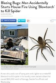 Kill Spider Meme - this is only okay in internet memes