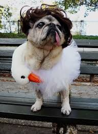 Funny Animal Halloween Costumes 28 Pug Halloween Costumes Images Animals Pug