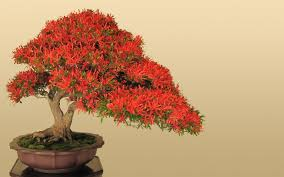 flowering bonsai trees youtube