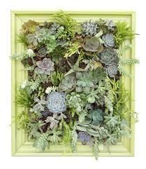 Succulent Kits by Living Room Succulent Living Wall Artificial Living Wall Art