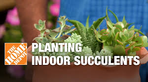 indoor succulents tips and tricks youtube