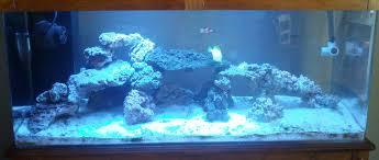 Live Rock Aquascaping Auspicious Aquarium Adding 20 Lbs More Live Rock