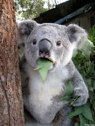 Meme Generator Koala - koala meme generator meme best of the funny meme