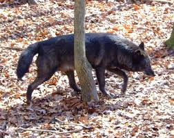 Tennessee wildlife images 13 more amazing photos of wildlife in tennessee jpg