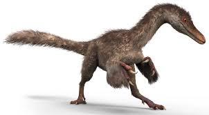 dinosaur bones how do we know their age brains on